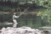 Fly Fishing in Blue Ridge Mountains